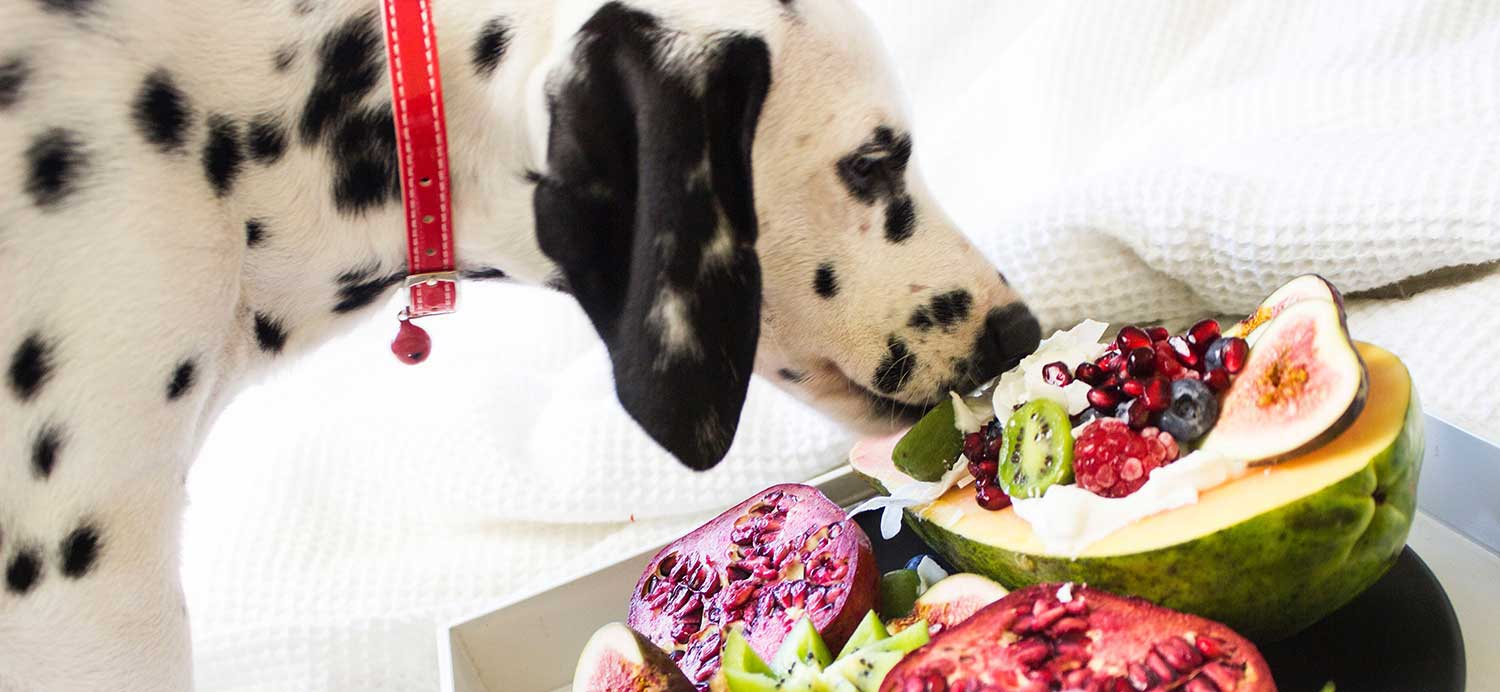 what-vegetables-can-dogs-eat