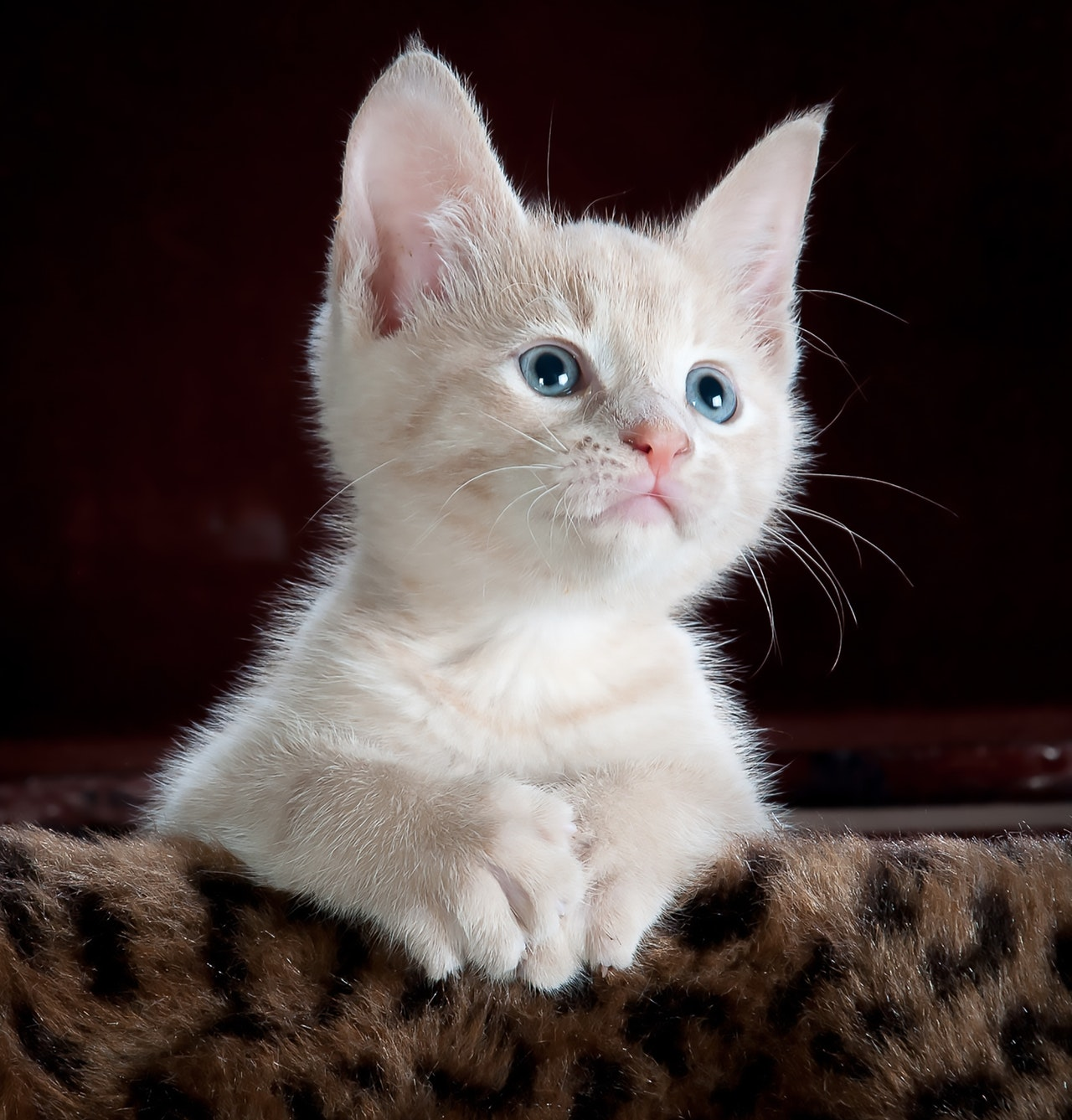 120-cat-name-ideas-from-movies