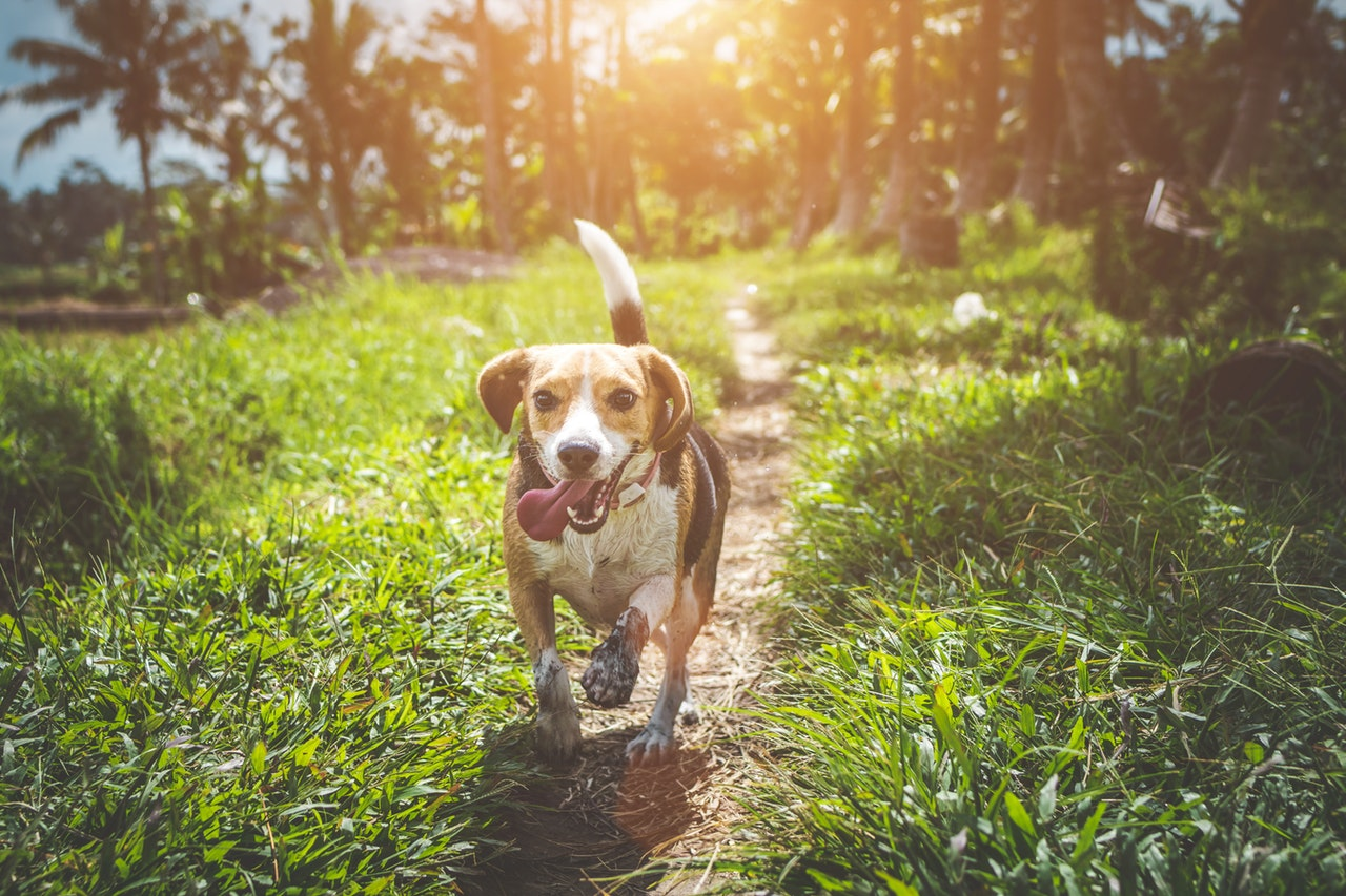 why-do-dogs-wag-their-tails