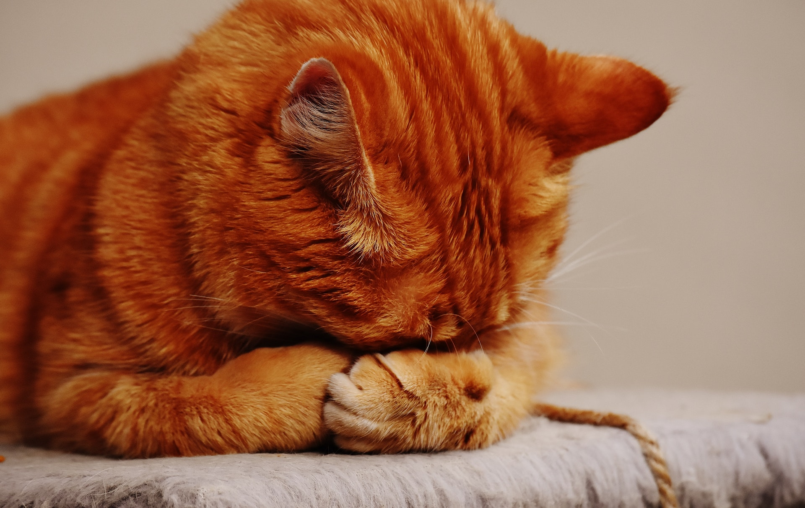 best-cat-food-for-older-cats