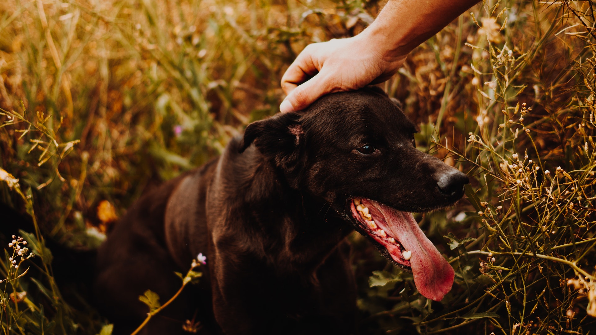 fda-announces-dog-food-brands-that-could-cause-heart-failure