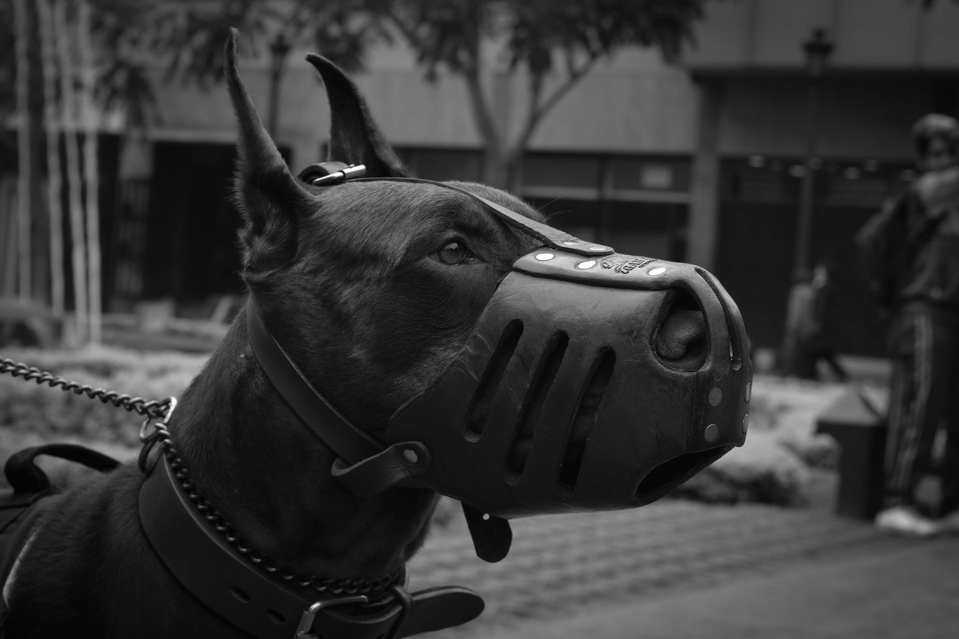 when-and-why-should-my-dog-wear-a-muzzle