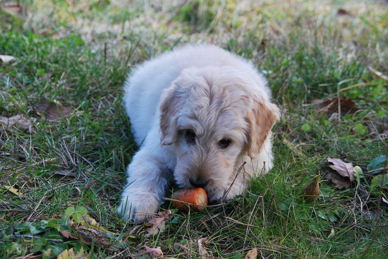 the-best-vegetables-for-your-dogs-to-eat