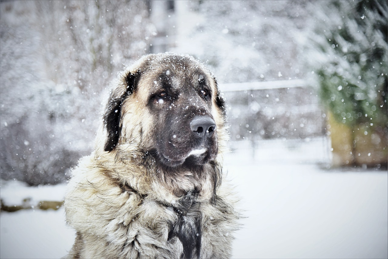 how-cold-is-too-cold-for-dogs